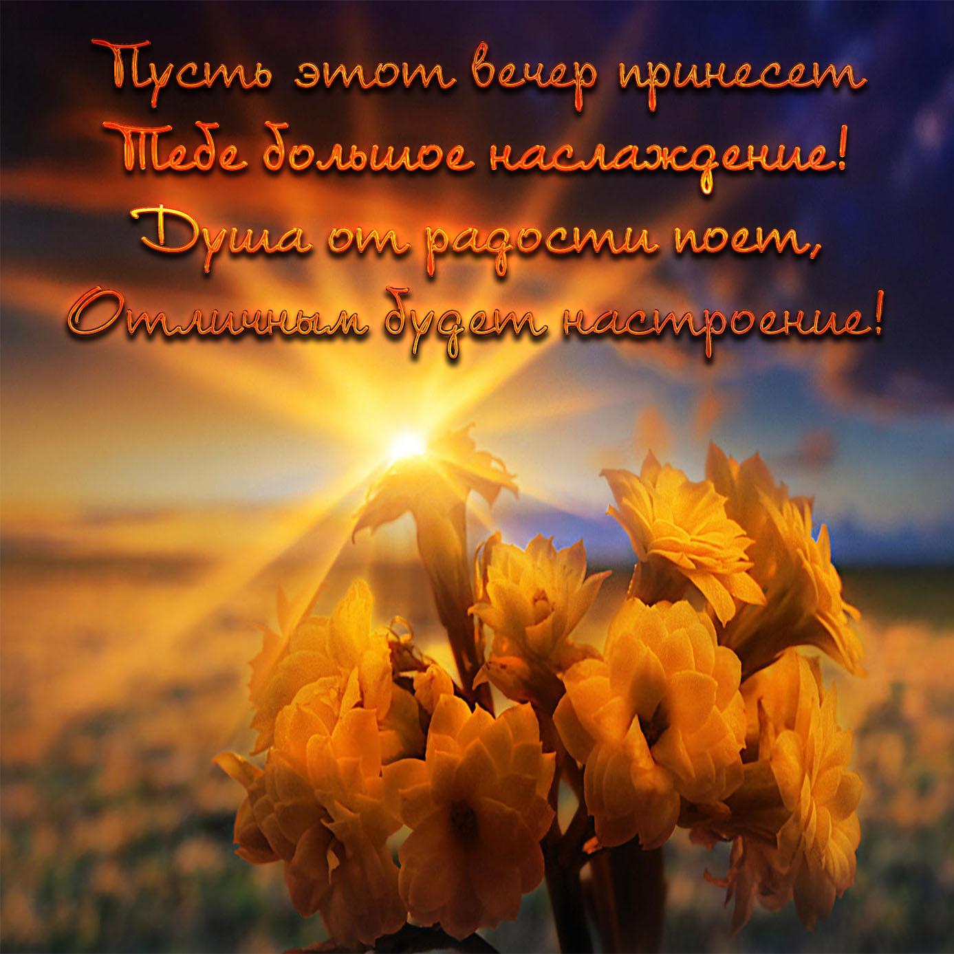 Картинка с цветами на фоне заката