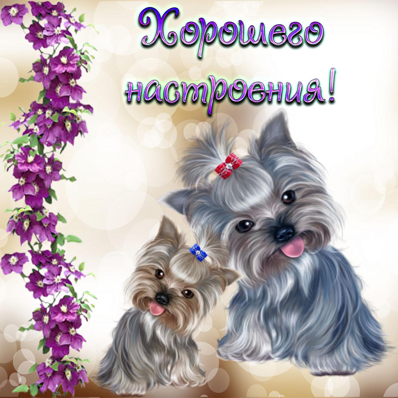 Картинка с собачками для хорошего настроения