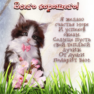 Красивая картинка с котиком в траве