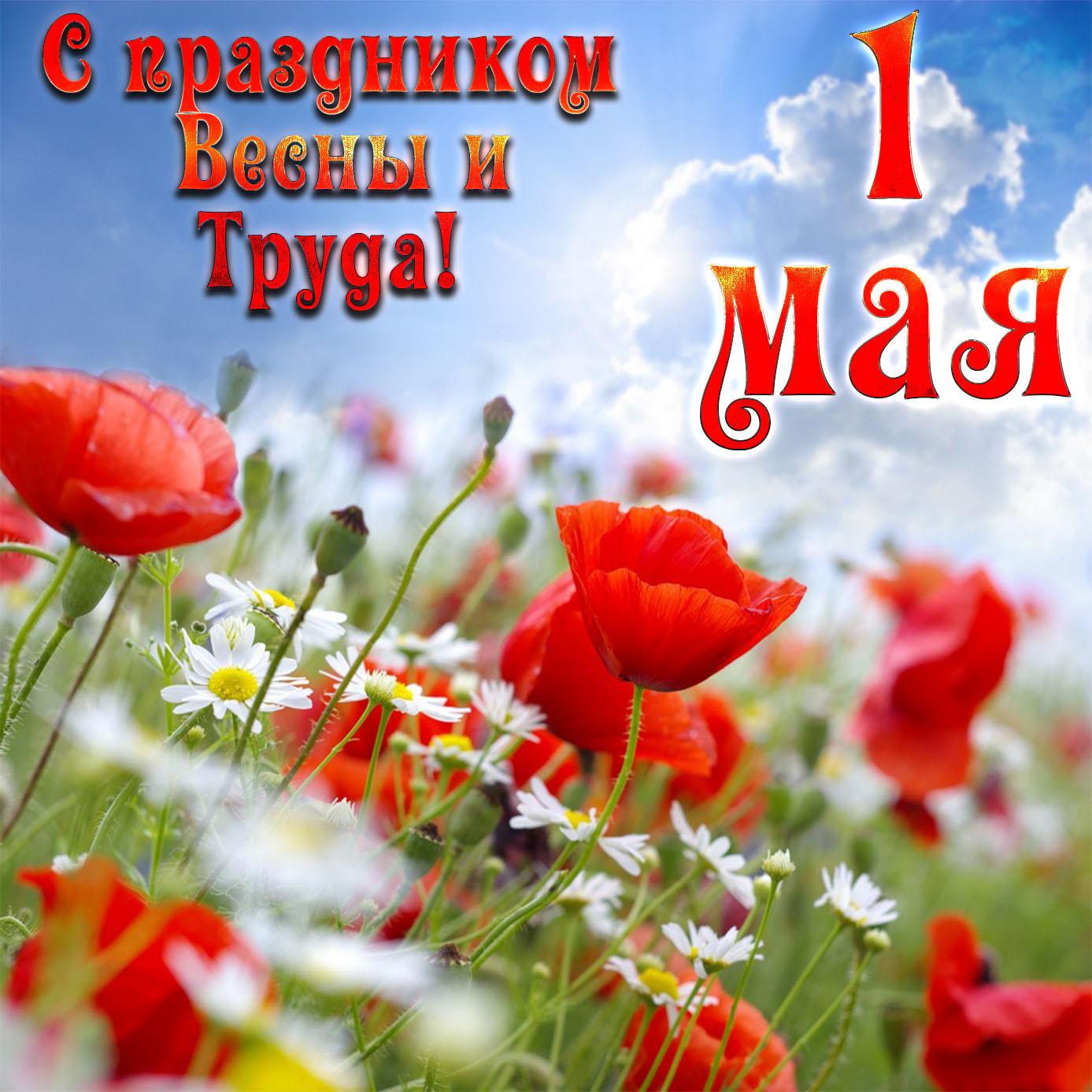 Картинка с цветами на праздник Весны и Труда