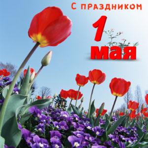 Картинка на 1 мая с красивыми маками в поле