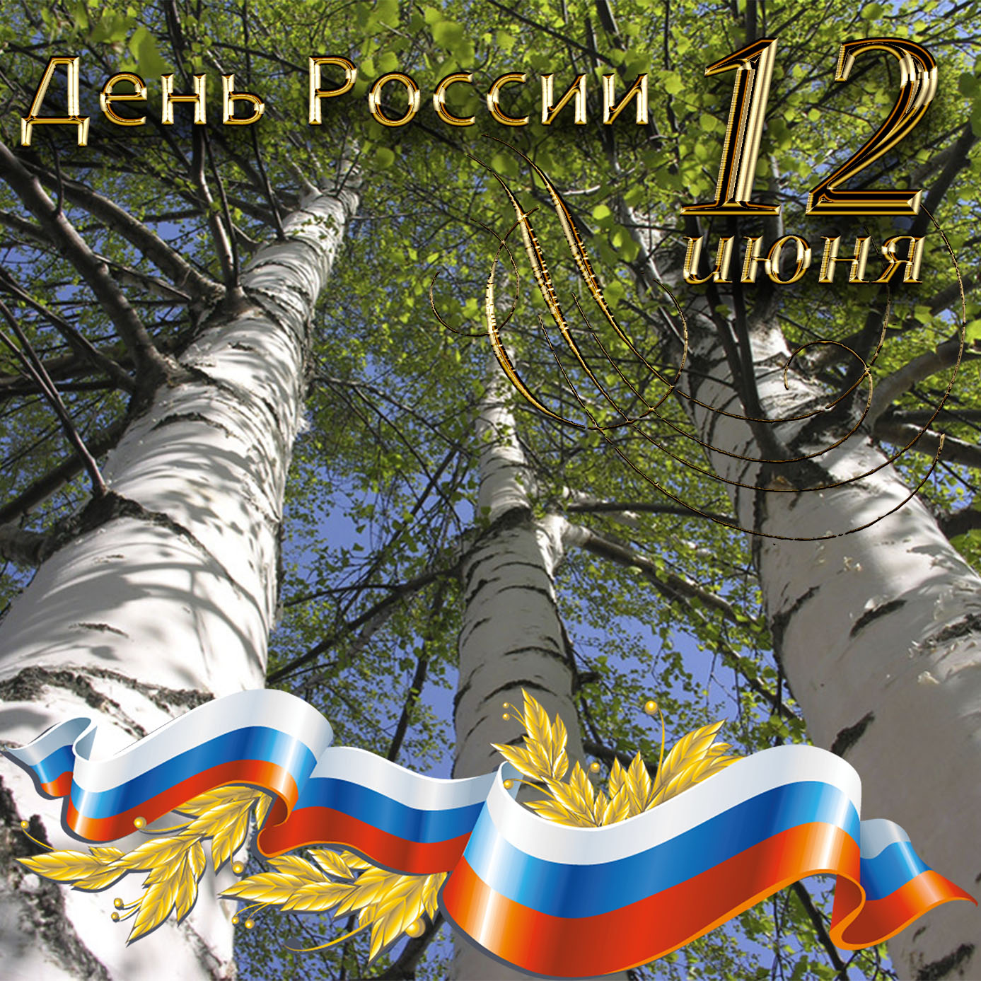 Картинка с берёзами на День России