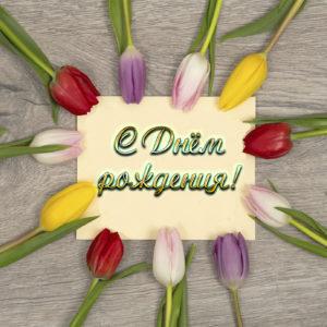 Открытка на День рождения с тюльпанами