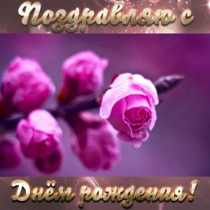 Открытка с розами на День рождения женщине