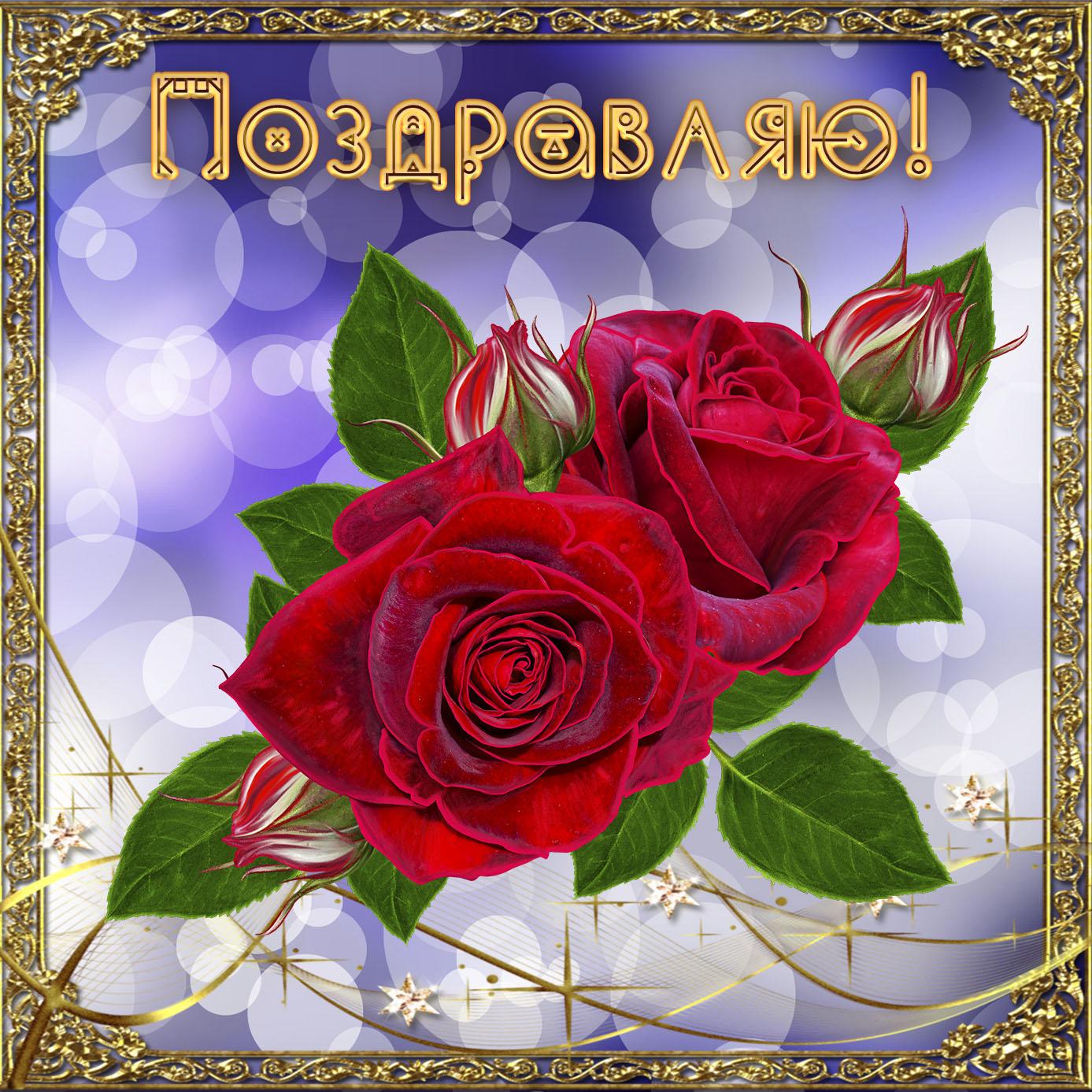 Картинка с красивыми розами на приятном фоне