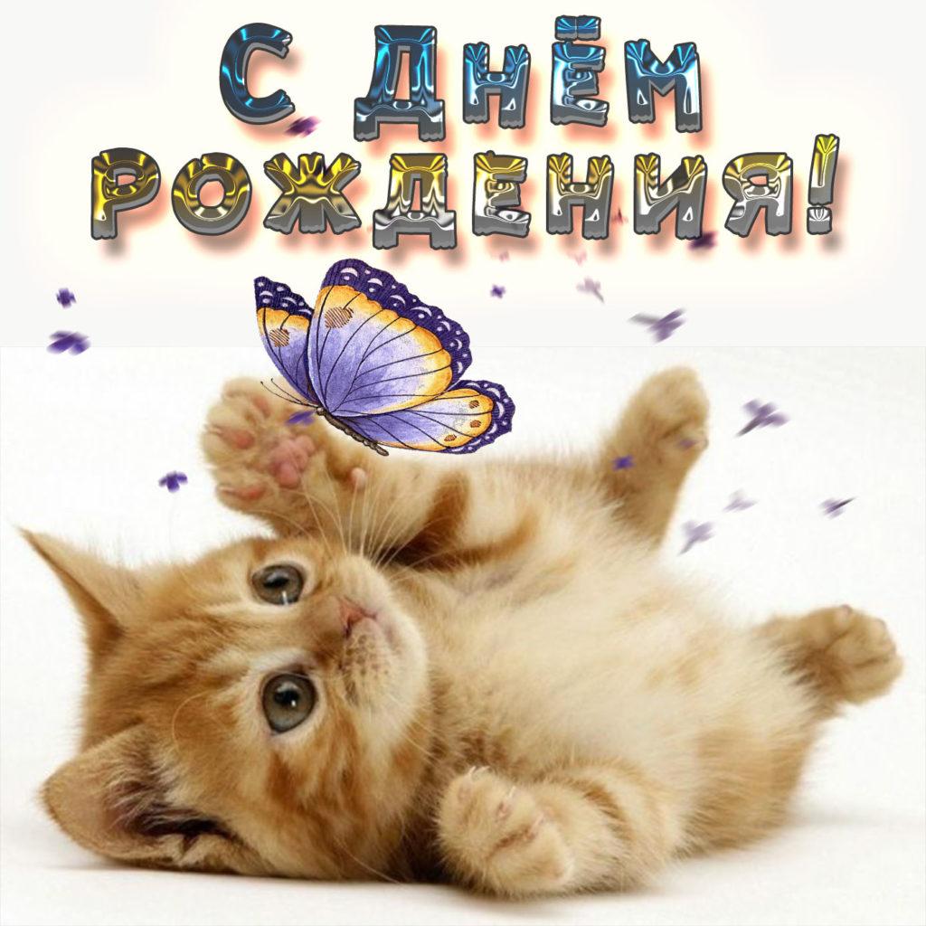 Котик с днем рождения картинки красивые