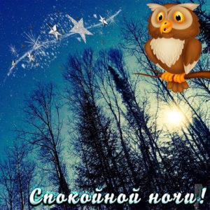 Открытка с совой на фоне ночного леса