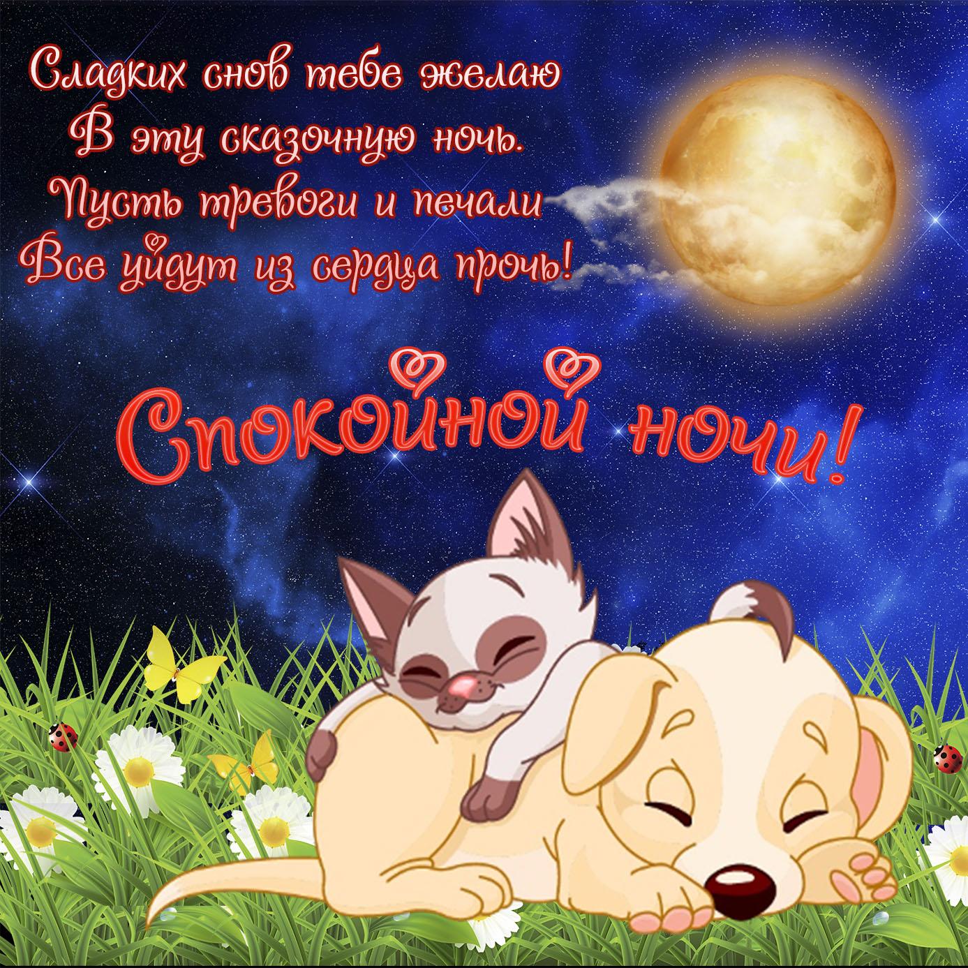 Красивая открытка со спящими животными