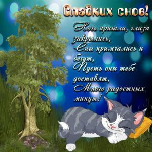 Открытка с котиком, спящим под деревом