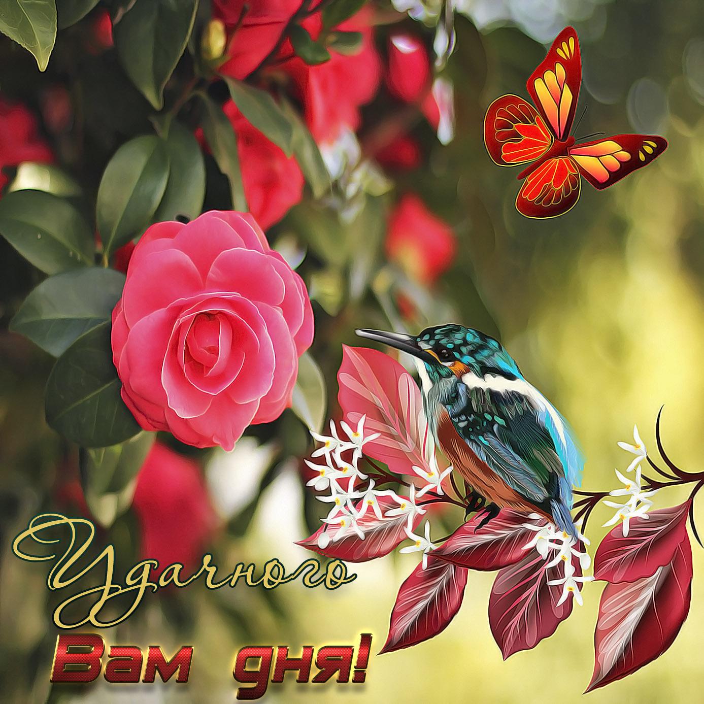 Яркая открытка с пожеланием удачного дня