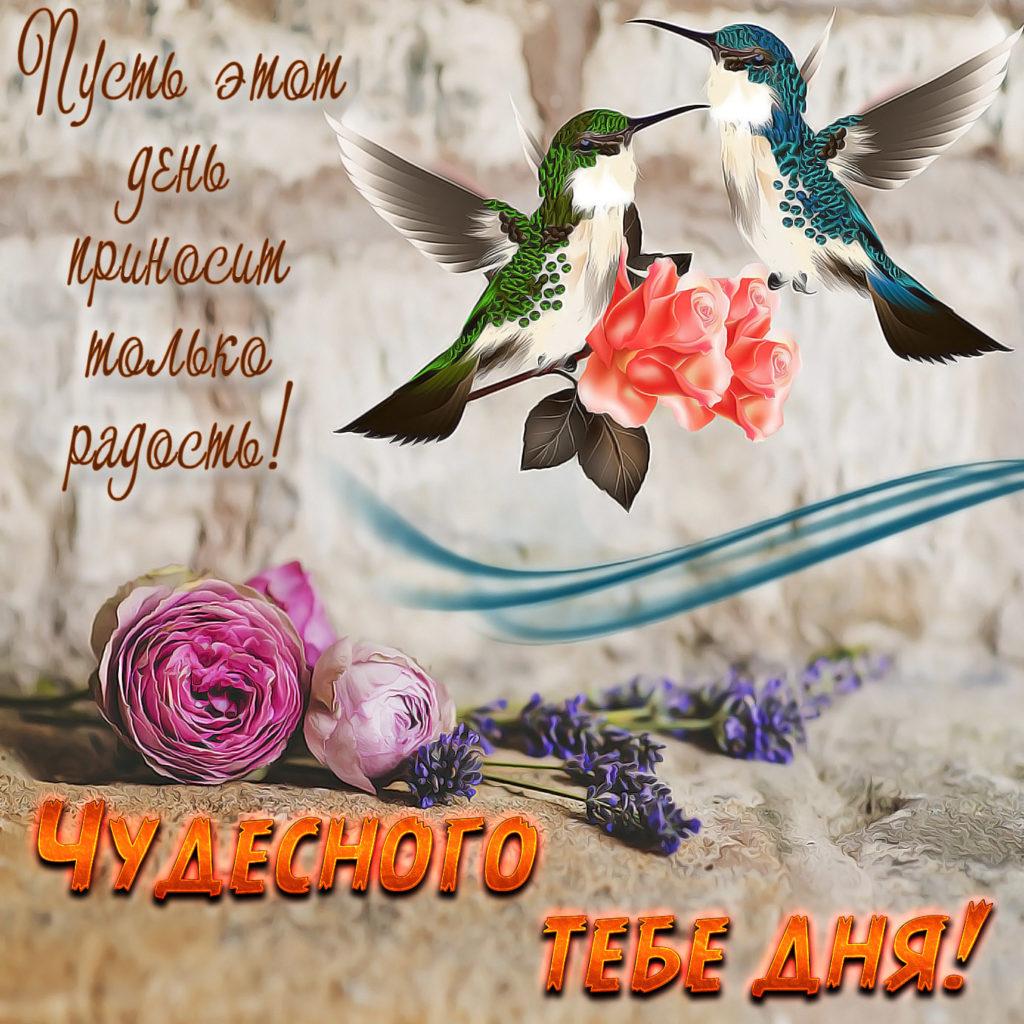 Свиньи, поздравление с днем птиц картинки стихи