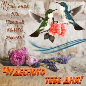 Картинка с птичками и пожеланием чудесного дня