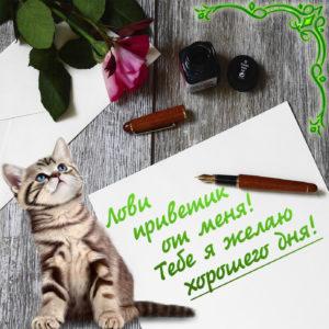 Картинка с котиком и пожеланием хорошего дня