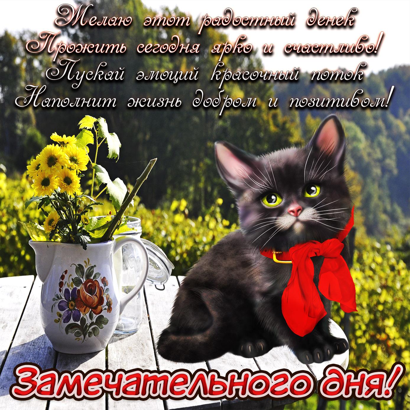 Милая картинка с букетиком и котом