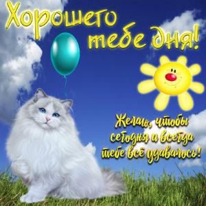Картинка хорошего тебе дня с милой кошечкой