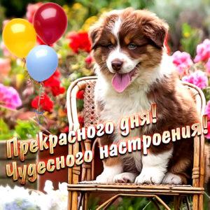 Милая открытка с собачкой и шариками