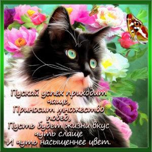 Картинка с красивым котиком в рамочке