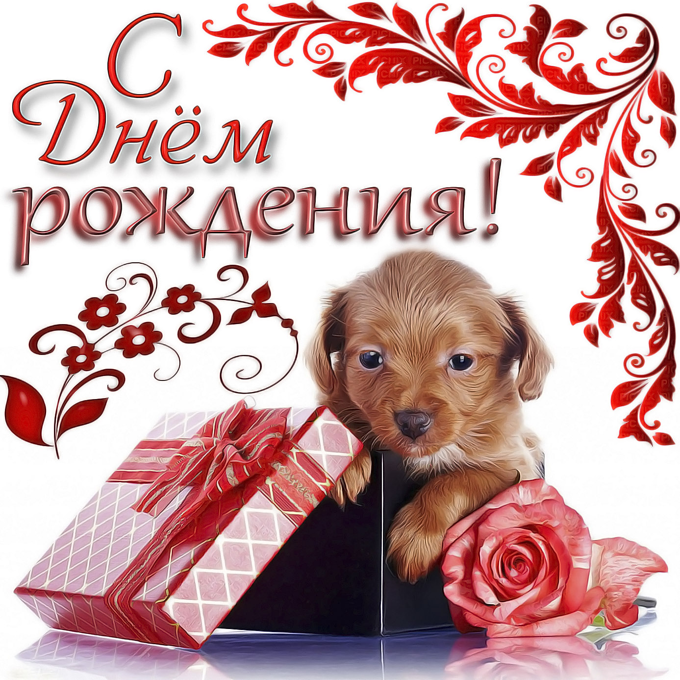 Милая открытка с собачкой для женщины