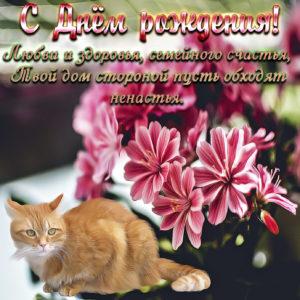 Картинка с котиком и цветочками для женщины