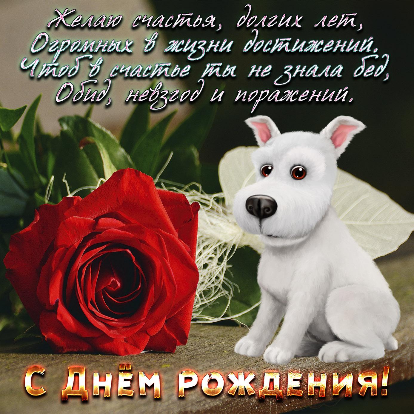 Картинка на День рождения с собачкой и розой