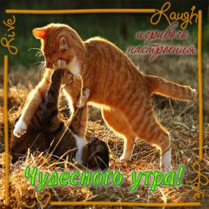 Картинка с пожеланием чудесного утра и котиками