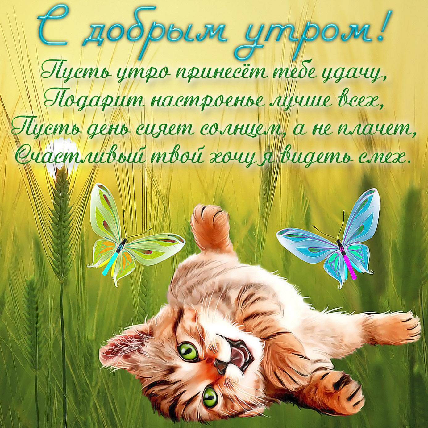 Открытка с рыжим котёнком и бабочками
