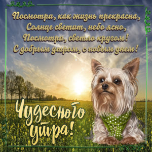 Картинка с собачкой и пожеланием чудесного утра