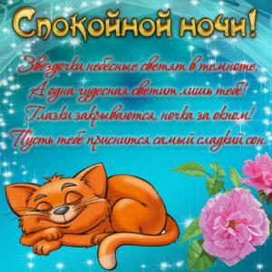 Картинка с котиком, пожеланием и розочкой