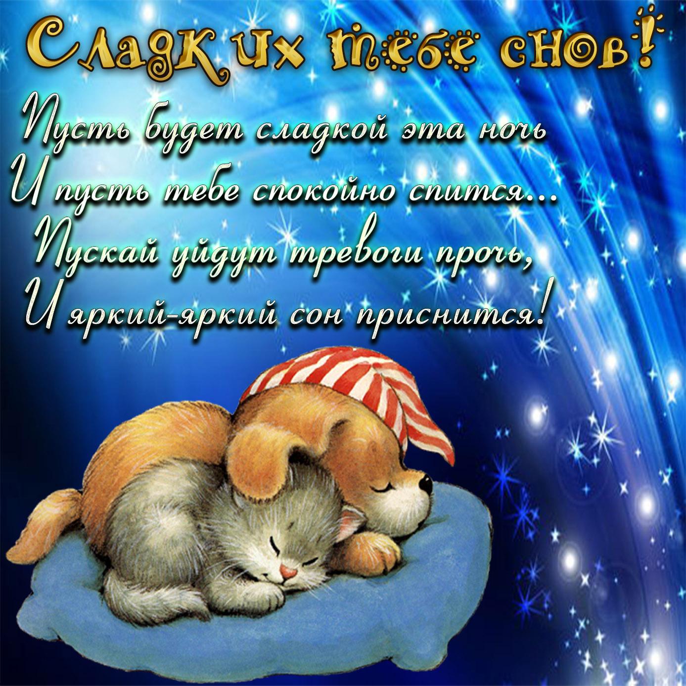 Милая открытка со спящими котиком и собачкой