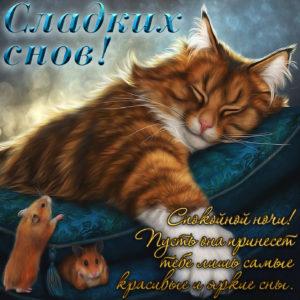Картинка с котиком и пожеланием сладких снов