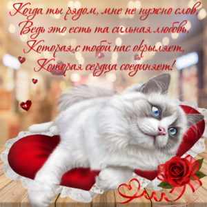Милая картинка с котиком  на красивом фоне