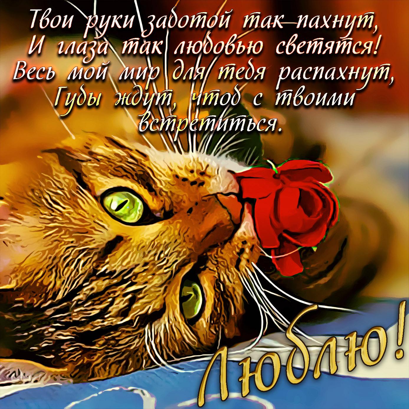 Красивая открытка с котиком и розочкой