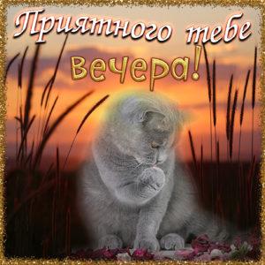 Милая картинка с котиком на фоне заката