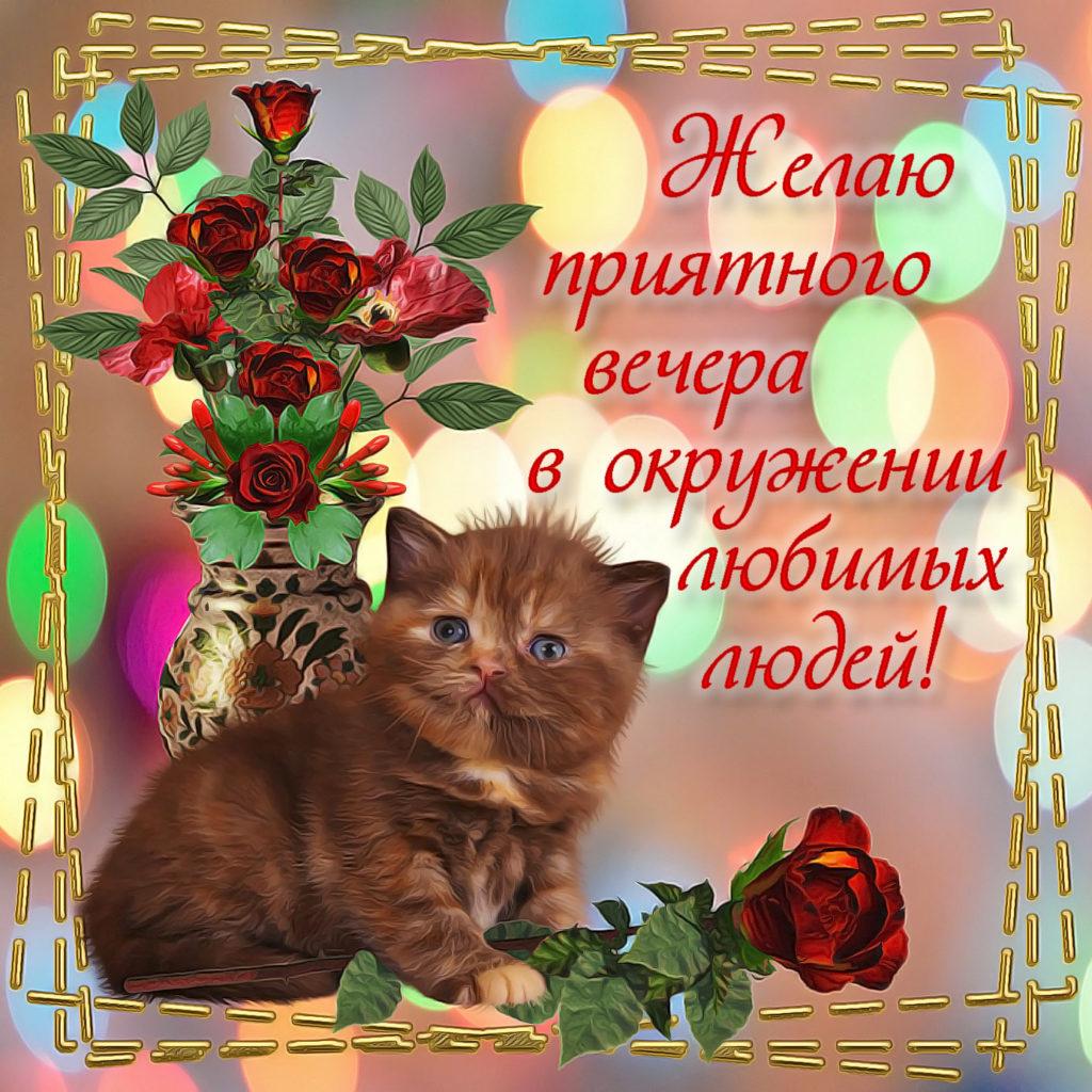Красивые открытки с добрым вечером с котиками живые