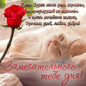 Открытка с белым котиком и красной розой