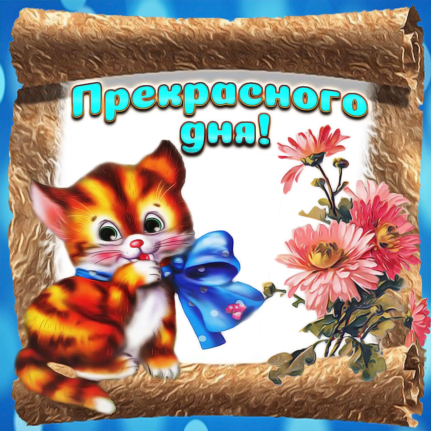 Милая открытка прекрасного дня с котёнком