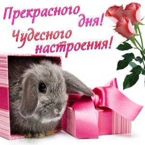 Милая открытка с кроликом и цветами