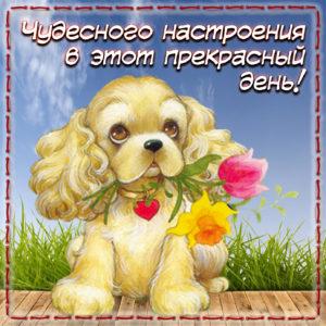 Картинка с забавной собачкой на красивом фоне