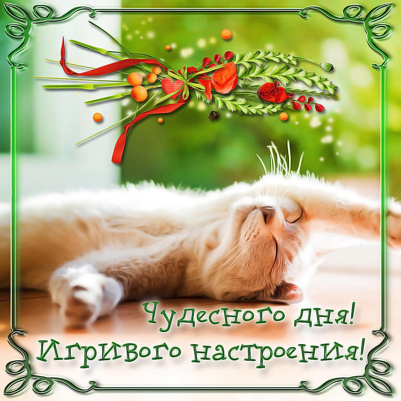 Картинка с котиком в игривом настроении