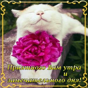 Красивая открытка с с белым котиком