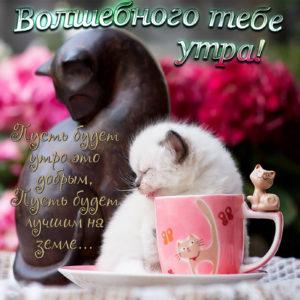 Забавная открытка с разными кошечками