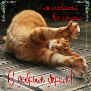 Милая открытка с проснувшимся котиком