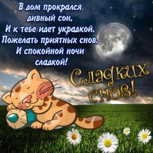 Картинка с котиком спящим на ромашковом поле