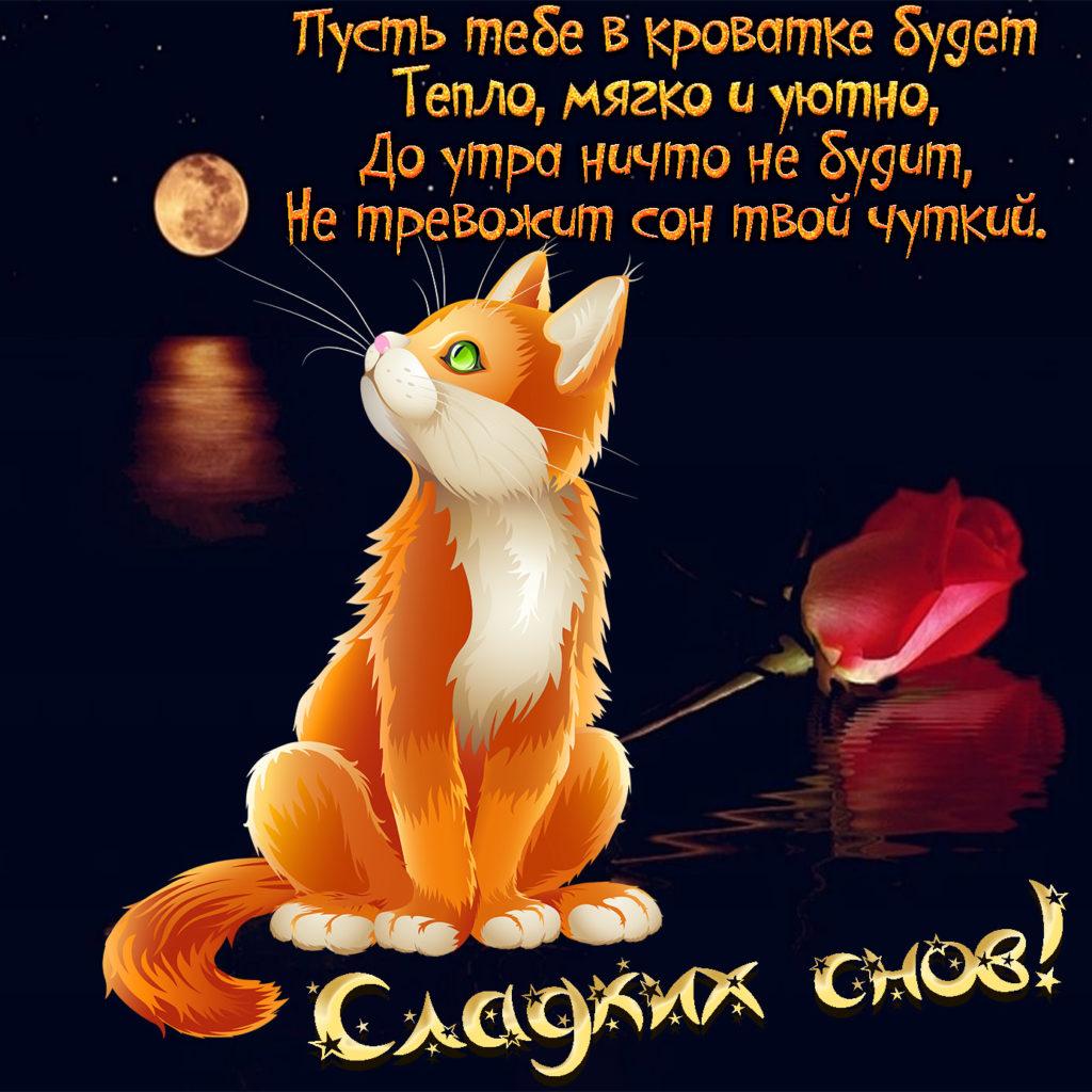 Открытка добрый вечер с кошкой, про марс
