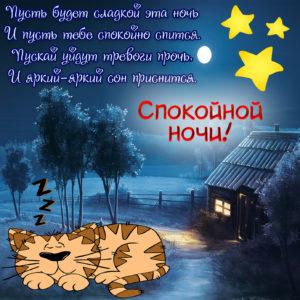 Картинка со спящим на природе котиком