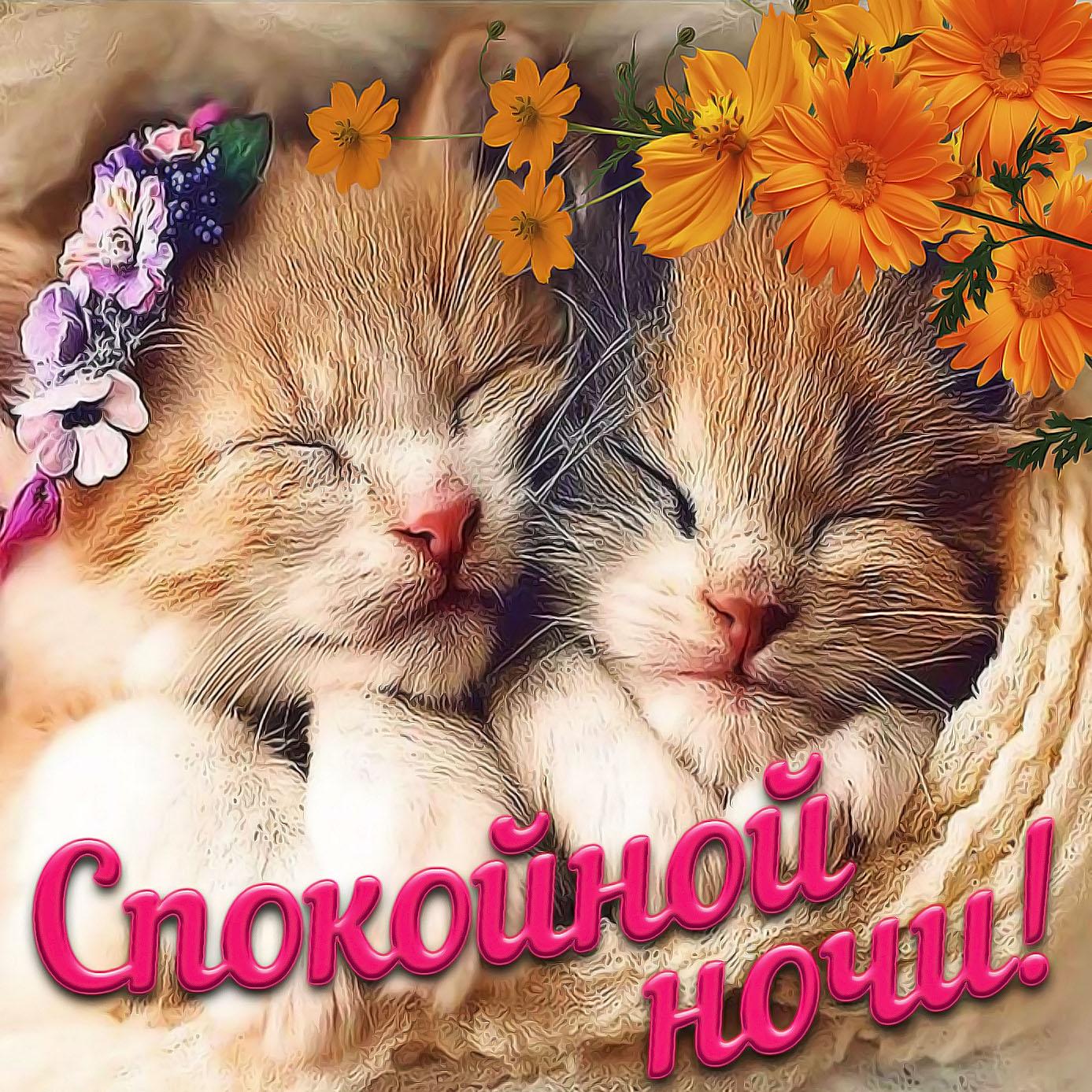 Добрая картинка со спящими котятами