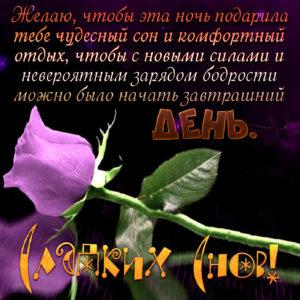 Картинка с розой и красивым пожеланием на ночь