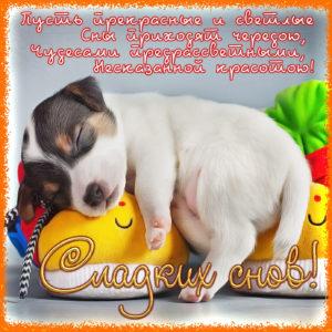 Милая открытка со спящим щеночком