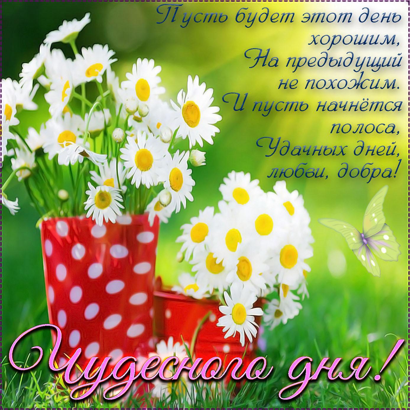 Пожелание чудесного дня на открытке с ромашками