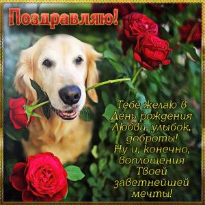 Собачка с розой на картинке для женщины